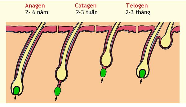 ăn gì ngăn rụng tóc