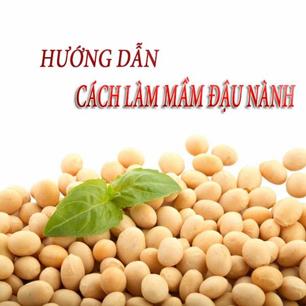 cách làm mầm đậu nành, cách làm mầm đậu nành tại nhà, cách làm mầm đậu nành tăng vòng 1, cách làm mầm đậu nành nguyên xơ, cách làm sữa mầm đậu nành, cách làm bột mầm đậu nành tăng vòng 1, cách làm mầm đậu nành nguyên xơ tại nhà, cách làm mầm đậu nành giảm cân, cách làm bột mầm đậu nành nguyên xơ, cách làm bột mầm đậu nành tại nhà, cách làm mầm đậu nành uống tăng vòng 1, cách làm bột mầm đậu nành nguyên sơ, cách làm mầm đậu nành nguyên sơ, cách làm mầm đậu nành để uống, kinh nghiệm làm mầm đậu nành, cách làm bột mầm đậu nành để uống, hướng dẫn làm mầm đậu nành, cách làm bột mầm đậu nành khô, hướng dẫn làm mầm đậu nành tại nhà, hướng dẫn cách làm mầm đậu nành, cách làm mầm đậu nành khô tại nhà, cách làm mầm đậu nành tăng cân, cách làm mầm đậu nành uống, cách làm mầm đậu nành để tăng vòng 1, mầm đậu nành làm như thế nào, cách tự làm mầm đậu nành tại nhà, cách làm tinh bột mầm đậu nành tại nhà, quy trình làm mầm đậu nành, cách làm tinh chất mầm đậu nành tại nhà, làm mầm đậu nành bột, nguyên liệu làm mầm đậu nành, quy trình làm bột mầm đậu nành, mầm đậu nành làm thế nào, làm mầm đậu nành uống, tự làm mầm đậu nành uống, cách làm mầm đậu nành chuẩn, hướng dẫn cách làm bột mầm đậu nành, cách làm mầm đậu nành tươi, hướng dẫn cách làm mầm đậu nành tại nhà, cách làm mầm đậu nành nguyên chất tại nhà