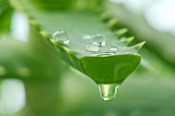 cách trị nám tự nhiên tại nhà, trị nám bằng thiên nhiên, trị nám từ thiên nhiên, cách trị nám tự nhiên, trị nám bằng phương pháp tự nhiên, trị nám bằng tự nhiên, trị nám bằng tự nhiên hiệu quả nhất, trị nám bằng thiên nhiên hiệu quả, cách trị nám bằng tự nhiên, trị nám từ thiên nhiên hiệu quả, trị nám da tự nhiên, các cách trị nám tự nhiên, cách điều trị nám tự nhiên, trị nám từ tự nhiên, các phương pháp trị nám tự nhiên, phương pháp trị nám tự nhiên