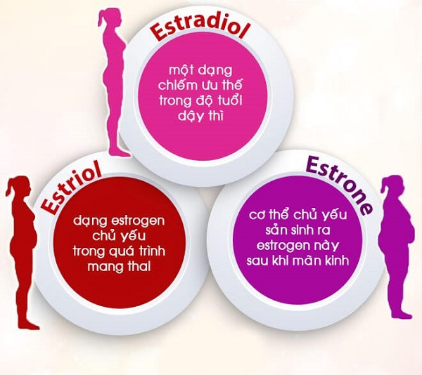 hormone estrogen là gì, bổ sung estrogen, thiếu estrogen, hoocmon estrogen, vien uong estrogen, thiếu estrogen nên ăn gì, tác dụng của estrogen, estrogen tăng cao, tăng estrogen, thiếu hụt estrogen, bổ sung estrogen bằng cách nào, cách bổ sung estrogen, thuốc bổ sung estrogen cho phụ nữ, estrogen có tác dụng gì, bổ sung estrogen tự nhiên, tăng cường estrogen bằng cách nào, suy giảm estrogen ở phụ nữ, bo sung estrogen tu nhien nhu the nao, cách tăng estrogen, giảm estrogen, nội tiết tố nữ estrogen, uống estrogen, bổ sung nội tiết tố nữ estrogen, cách làm tăng lượng estrogen trong cơ thể, tăng estrogen bằng cách nào, biểu hiện thiếu estrogen, hormone estrogen là gì, rối loạn estrogen, suy giảm estrogen, thieu estrogen nu, bo sung estrogen, bổ sung estrogen cho phụ nữ, cách làm tăng estrogen tự nhiên, tang estrogen o phu nu, tăng estrogen tự nhiên, dấu hiệu thiếu estrogen, cân bằng nội tiết tố nữ estrogen, thiếu nội tiết tố nữ estrogen, bo sung estrogen nhu the nao, cách làm tăng estrogen, làm sao để tăng lượng estrogen, dấu hiệu thiếu hụt estrogen, estrogen là chất gì