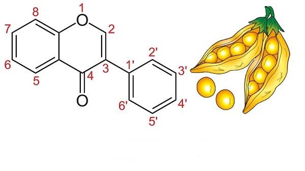 Hàm lượng isoflavon trong mầm đậu nành thực tế là bao nhiêu? Bạn đã biết chưa?