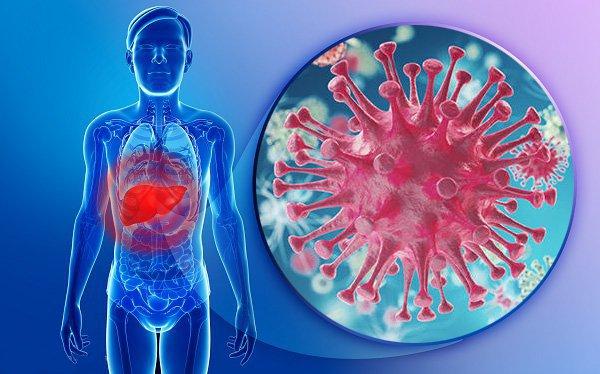 Isoflavon giúp chống oxy hóa và điều trị tế bào ung thư
