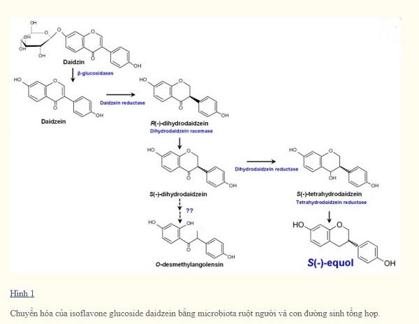 Isoflavon có lợi cho sức khỏe