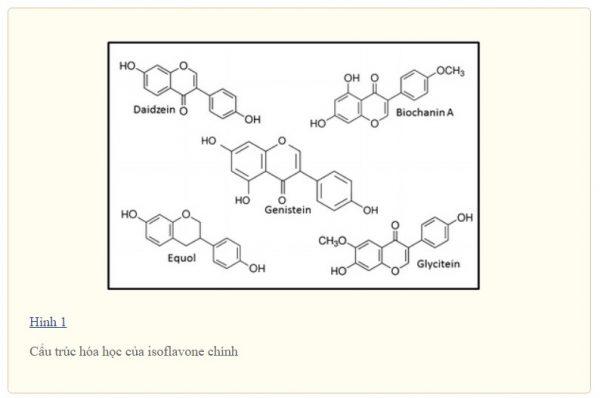 Isoflavon ức chế sự xâm lấn của tế bào ung thư tuyến tiền liệt