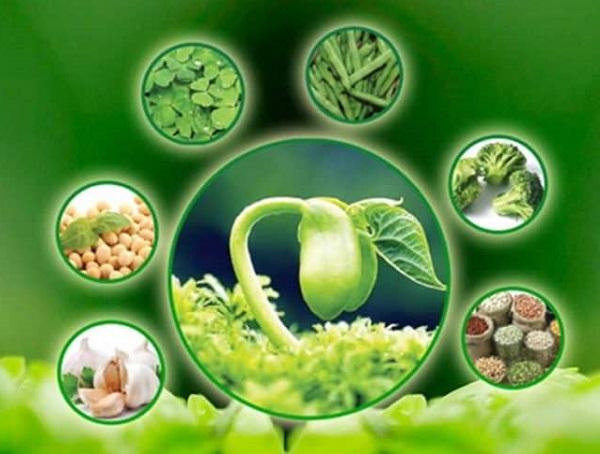 mầm đậu nành trị nám tàn nhang, uống mầm đậu nành trị nám tàn nhang, trị nám bằng mầm đậu nành, Phương pháp trị nám bằng mầm đậu nành, trị nám bằng tinh bột mầm đậu nành, Cách trị nám với bột mầm đậu nành, trị nám với bột mầm đậu nành, mầm đậu nành trị tàn nhang, mầm đậu nành trị nám, uống mầm đậu nành trị nám, mầm đậu nành trị tàn nhang