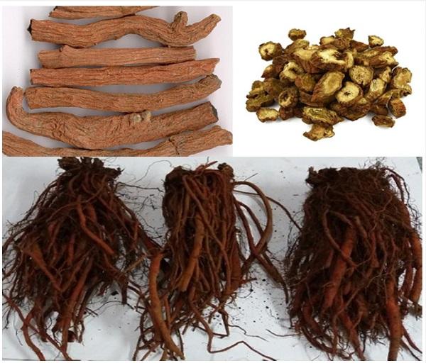 Cao khô đan sâm trong Nano mầm đậu nành FlaGold có tác dụng gì giải đáp chi tiết