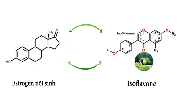 Nano Isoflavon – Công nghệ đột phá nâng tầm giá trị mầm đậu nành trong việc chăm sức sức khỏe, sắc đẹp và sinh lý nữ