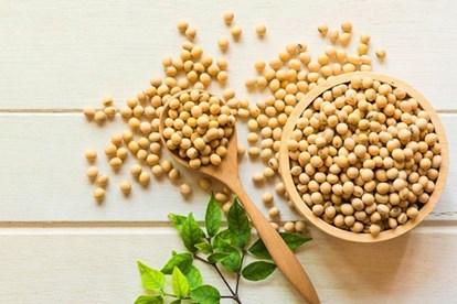 trong mầm đậu nành có chất gì, đậu nành có chất dinh dưỡng gì, mầm đậu nành có chất gì, đậu tương có chất gì, đậu nành có những chất gì, dinh dưỡng trong mầm đậu nành, thành phần dinh dưỡng trong mầm đậu nành, chất dinh dưỡng trong mầm đậu nành, hàm lượng dinh dưỡng trong mầm đậu nành, các chất có trong mầm đậu nành, chất trong mầm đậu nành, thành phần trong mầm đậu nành, thành phần có trong mầm đậu nành