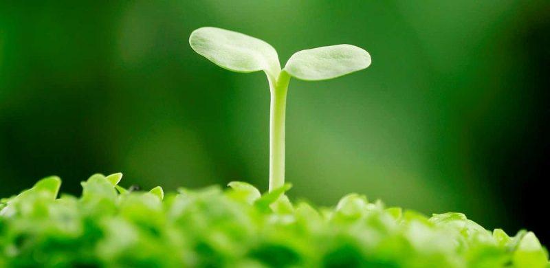 Mầm đậu nành là nguồn cung cấp Estrogen tự nhiên tuyệt vời