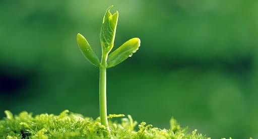 Uống mầm đậu nành mỗi ngày giúp làm giảm nám, tàn nhang hiệu quả