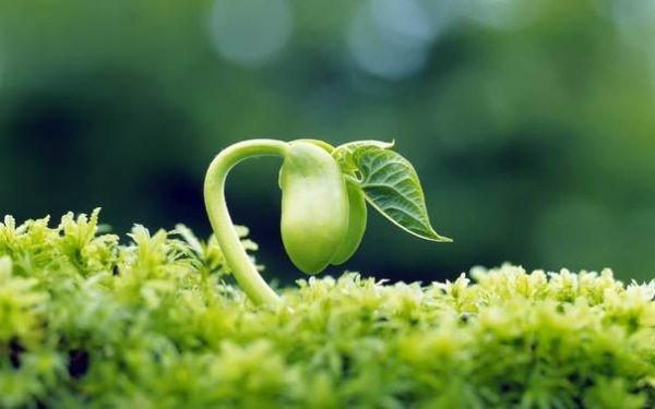 Tác dụng của mầm đậu nành trong việc chống lão hóa da là gì?